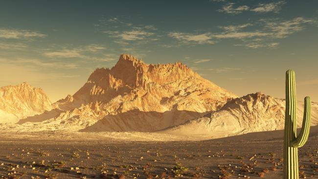 sonoran-desert-07-650x366