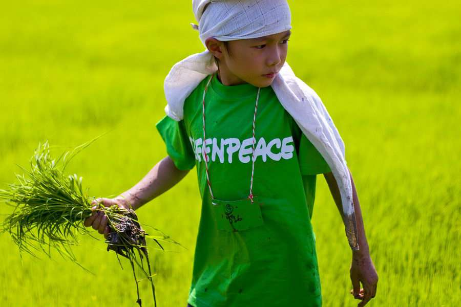 A child gets ready to plant a rice seedling in a bid to create the first ever art on a rice field in Thailand. The 10-rai rice field in Ratchaburi province will grow into a beautiful art in the next 4 months to show an image of farmers wearing straw hats and using sickle to harvest rice.